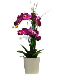 Mor Fuşya Orkide