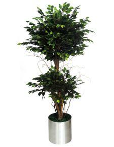 Yapay Benjamin Ağacı- Çift katlı