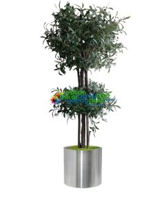 Çift Katlı Zeytin Ağacı