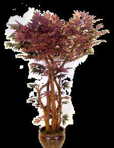 Kızıl Yeşil Benjamin Ağacı