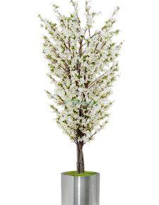 Yapay Beyaz Erik ağacı