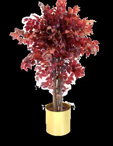 Kızıl Hazan Ağacı
