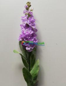 Yapay mor şebboy çiçek
