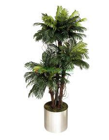 Yapay Sikas ağacı