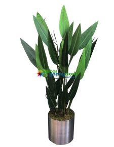 Yapay Çiçeksiz Starliçe Bitkisi