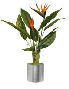 Yapay Sterliçya Çiçeği