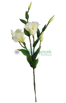 Beyaz lisiyantüs çiçek