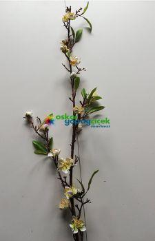 Beyaz çiçekli  badem dalı