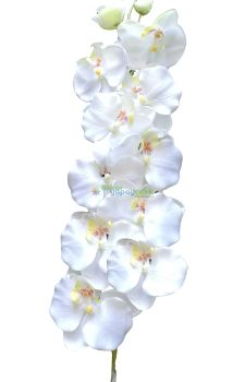Yapay Beyaz Orkide