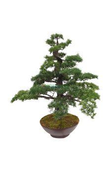 yapay bonzai ağaç