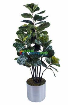 Yapay incir ağacı  - Fiddle  Tree