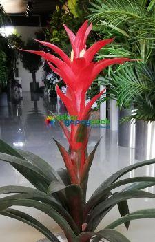 Yapay Guzmanya Çiçeği