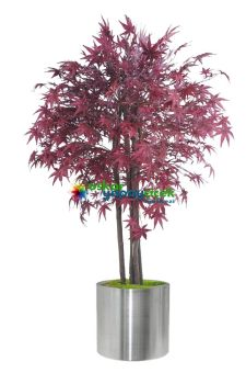 Yapay Kızıl Kahve hazan ağacı