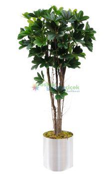 Yapay Şeflore Ağaç