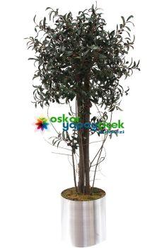 Yapay Zeytin Ağacı